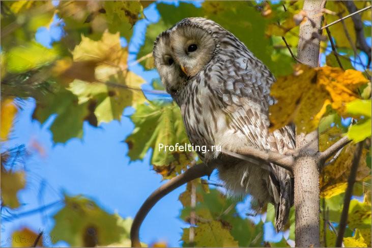 Ура! Уже через неделю открываем учебный год бесплатным вебинаром «Осеннее рандеву»!